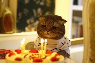 cat_birthday_parties_16