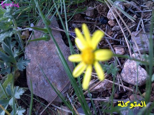 الاردن في الربيع صور 5909637842_18e706f41d.jpg