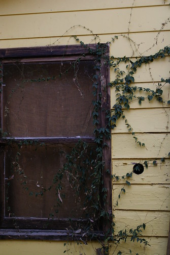 window with vines by ceck0face