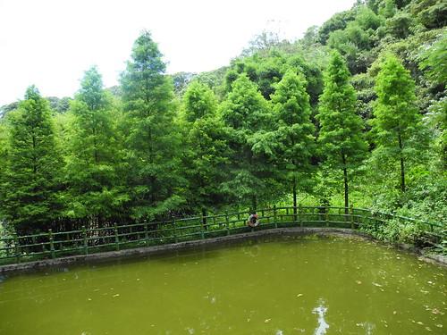 華龍村好山好水,源於村長對土地的珍惜。