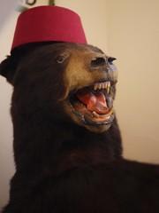 Fez Bear (the justified sinner) Tags: bear stuffed market taxidermy panasonic fez g1 20mm flea eastsussex lewes f17 justifiedsinner