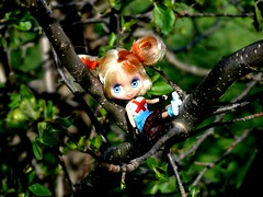 Blythe Girl in a Tree