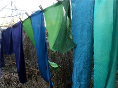 Indigo on silk (milkweed seed) Tags: blue green purple indigo naturaldye logwood plantdyed indigodyed silkcharmeuse