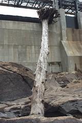 Hiram, Maine. (maineman152 (Lou)) Tags: june river stream dam maine roots logs driftwood sacoriver hydroelectricdam