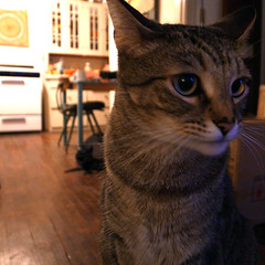 ANDY (TRUE 2 DEATH) Tags: friends andy cat toy monkey friend tabby kitty neko piper 猫 ねこ chrissypiper andyanderson grdigitaliii