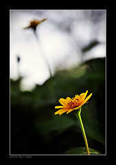 The two worlds of reality (e.nhan) Tags: flowers light flower art nature closeup daisies landscape colorful colours shadows dof bokeh arts daisy backlighting enhan