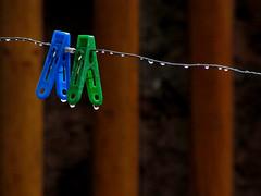 Otoño en mi Jardin (www.pablotipo.cl) Tags: chile naturaleza lluvia agua gotas otoño invierno ropa