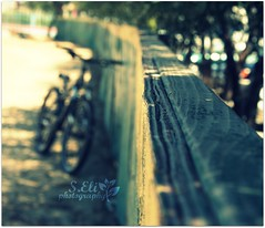 Long Weekend (lizbeth ) Tags: wood blur tree bike bicycle fence madera colours dof bokeh pov perspective rail bicicleta depthoffield textures rbol bici cerca arvore valla puntodefuga hff cerco fencefriday happyfencefriday imthewomanwholovedbicycles