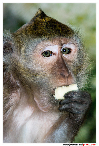 The monkey eats bananas by joaoamaralphoto