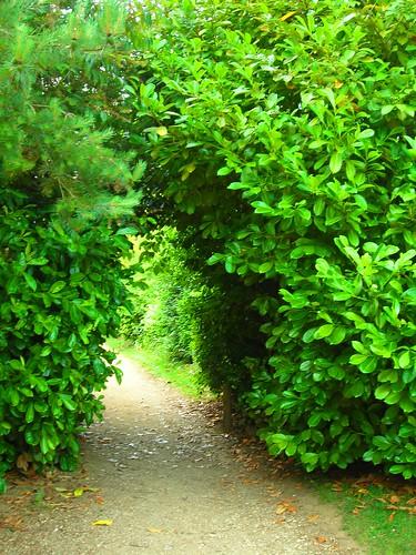 Through The Secret Walkway