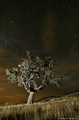 La encina (Carlos J. Teruel) Tags: longexposure espaa nikon nightshot paisaje murcia nocturna nocturnas d300 2011 strobis tokina1116 xaviersam losroyos