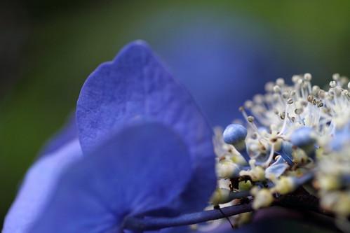 青の蕾_5659