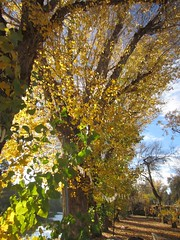 Fall_Talkoot_074