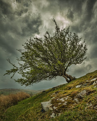 The Lone Tree