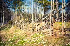Blackssvallen (netzanette) Tags: nature 50mm nikon sweden bokeh fx d600 hlsingland nikond600 grdesgrd fieldfence blackss blackssvallen