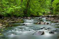 whitewater (frank-heinen-photographer) Tags: nature water creek landscape flow whitewater wasser sommer natur eifel lee nrw fluss landschaft wald rur nationalparkeifel naturnrw leebigstopper wwwfrankheinenphotographerde natinalparkeifel
