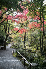 Tenryū-ji (veropie) Tags: travel japan kyoto asia trains bamboo traveller arashiyama nippon traveling bambooforest eastasia kyotoprefecture notatourist tenryūji saganobambooforest keifukuelectricrailway