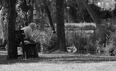 (diddlina72002) Tags: parco nature water animal duck natura umbria clitunno fontidelclitunno
