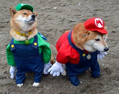It's Mario time! (specialpuppiescom) Tags: dog dogs doggies puppies pups pup canine k9 pooch pet pets shepherd retriever animal animals specialpuppiescom