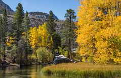 Lake Sabrina Area (MC_9398) (matxutca (cindy)) Tags: outdoors easternsierras fall leaves nature fallcolors foliage mountains rockformations