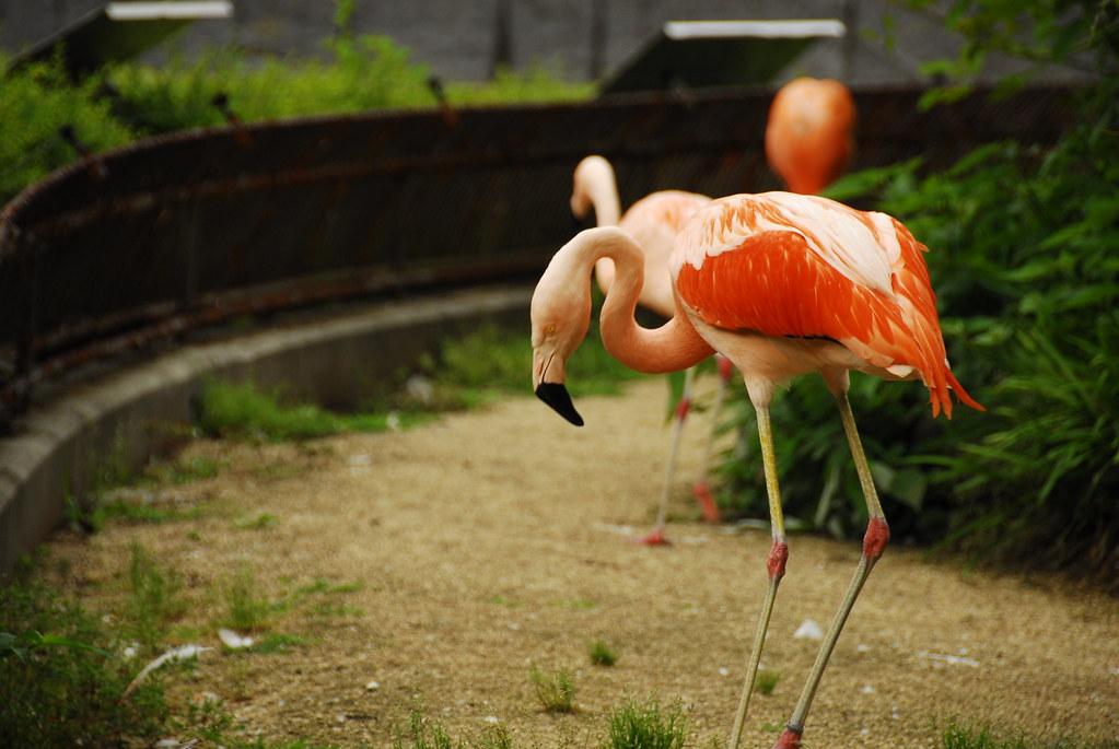 159/365 | Tobe Zoo.