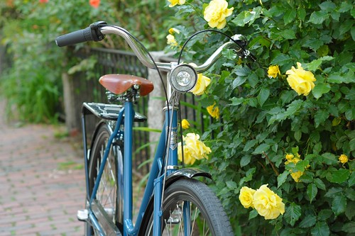Blue Pilen, Yellow Roses