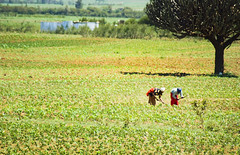 "PhotoFly Travel Club Kenya Safari 2011! • <a style=""font-size:0.8em;"" href=""http://www.flickr.com/photos/56154910@N05/5893003124/"" target=""_blank"">View on Flickr</a>"