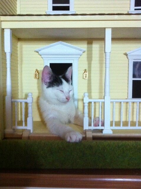 Brian cat playing in my dollhouse