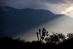 Captured Cactus_2707 (hkoons) Tags: light sunset cactus sky sunlight mountain storm mountains rain clouds cacti landscape mexico countryside desert dusk air country hills rays supershot