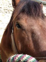 Umour se restaure (Gypsy Cob) Tags: horses horse cheval îledefrance 300views 300 77 iledefrance each equine chevaux iphone drafthorse seineetmarne ceffylau trait umour eich heavyhorse capall over300views trekpaard chevaldetrait equinephotography ardennais zugpferd capaill kezeg equinephotographer traitardennais umourdelavue