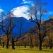 Großer Ahornboden, Hinterriß, Tirol