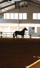 Concurso Morfológico, feria del caballo en Jerez de la Frontera