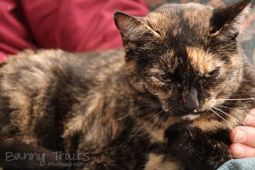109-speedlite kitty