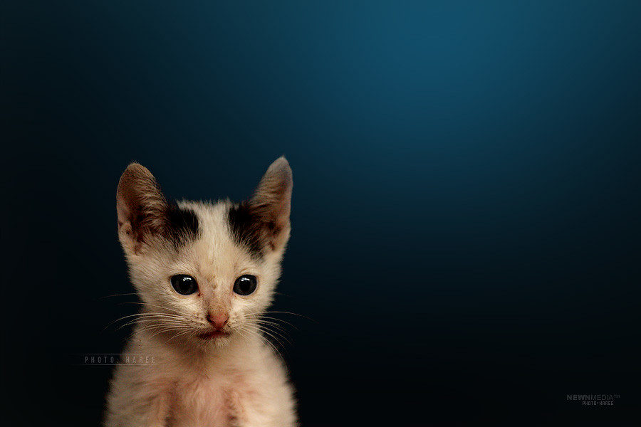Kitten - Photography by Haree for Nishchalam.