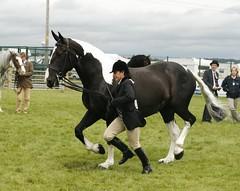 Coloured (Elrenia_Greenleaf) Tags: show horse royal highland ponies equestrian 2011 ingleston