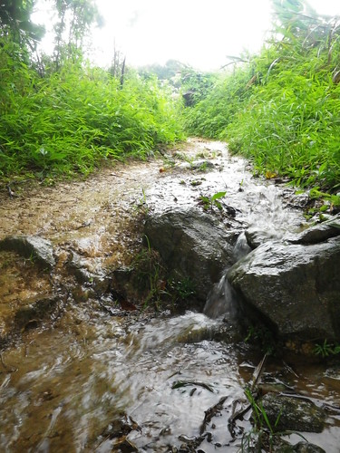 20110629 Torrential Rain Road/Trail Run