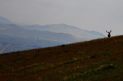 montana july 2011_1842l