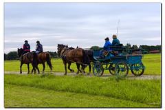 Sonntagsausflug (Helmut Reichelt) Tags: leica horses germany bavaria carriage sommer kutsche natur feld juli pferde m9 knigsdorf