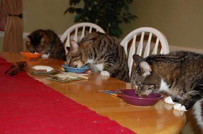 cat_birthday_parties_03