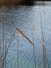 fanions (overthemoon) Tags: blue brown lake water reeds lac croatia grasses ripples breeze plitvice