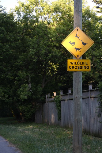 WILDLIFE CROSSING