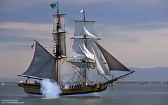 Lady Washington (Bob Stronck) Tags: ships sail sanfranciscobay tallship tallships redwoodcity portofredwoodcity ladywashington hawaiianchieftain ©rmstronck stronckphotocom historicalseaportorg