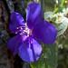Flora verso Oña (2)