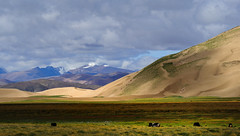 Ice peaks and desert sand dunes all visible in the Tibetan Himalayas, yak grazing, this is also a wetland. (reurinkjan) Tags: scenery scene scape tar brahmaputra 2011 tibetautonomousregion  janreurink tibetanplateaubtogang tibet himalayamountains tibetthelandofsnowsbodgangscangyiyul natureofphenomenachoskyidbyings landscapesceneryrichuyulljongsrichuynjong naturerangbyungrangjung  yarlungtsangpo tsanglatowesterntibet sagacounty landscapepictureyulljongsrimoynjongrimo himalaya landscapeyulljongsynjong himalayamtrangerigyhimalaya dunejemeri driftingsandgyundrjema sandgoingbackandforthgyundrjema sandyhillinstodlungjemagola desertsandjema tibetthecountryoffrostkhyakpbyl tibetanlandscapepictureynjongrimonb tibethimalayanlandscapes