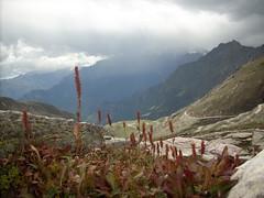 Rohtang Pass - HP (Mark Gomes) Tags: india rohtangpass himachalpradesh redplants