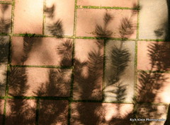 Shadow Traces (Rich Klein Photography) Tags: life bricks southcarolina traces aiken hopelandgardens canonxsi masterclasslive
