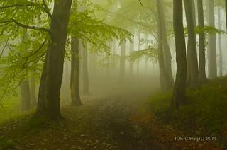 Scary forest - strašidelný les - straszny las