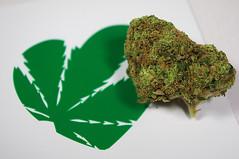 weed porn (GanjaGrouch) Tags: weed 420 pot marijuana cannabis stoner ganja kush