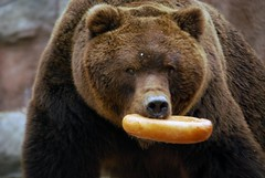 Kamtschatkabr im Zoo Brno (catnip254) Tags: bear zoo tschechien brno grizzly br zoobrno brnn kamtschatkabr kamchatkabrownbear sibirischerbraunbr