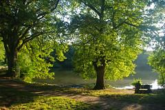 Un soir au bord de l'tang de Cernay (jmsatto) Tags: soir tang arbres lumire banc homme solitude cernay yvelines